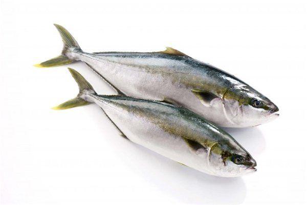 Fresh Yellowtail Hamachi From Japan Whole Fish About 35kg