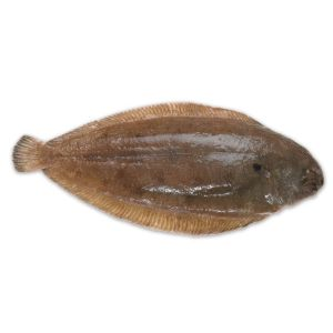 Whole WILD netted dover sole 265 aed/kg - 300 to 400g/piece