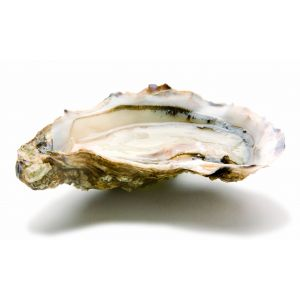 Fine de Claire oysters n3 from Cancale Bay