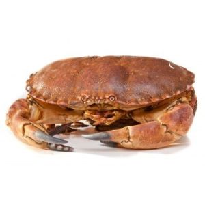 Live WILD brown crab from Brittany 600/800 165 aed/kg - 600g price will be adjusted as per final weight