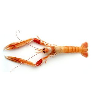 Chilled WILD langoustines XXXL 3/5 from Brittany - 1kg