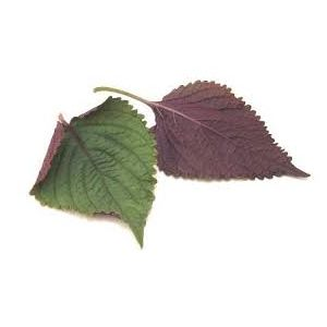 Fresh shiso leaves - 100g