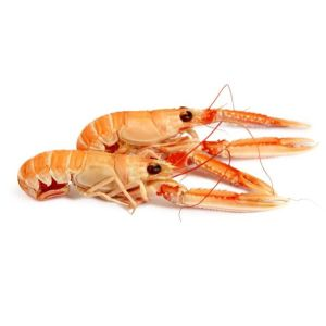 Fresh langoustines medium size 10/15 - 1kg
