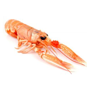Chilled WILD langoustines XXL 7/9 from Brittany - 1kg