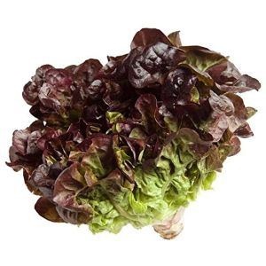 Organic red oak lettuce - 400g