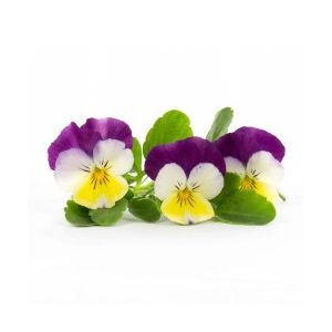 "Edible pansy ""big"" flowers - 30 to 50g per punnet - sweet green flavor"