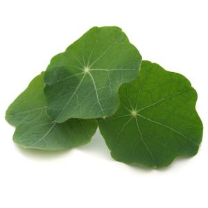 Nasturtium leaves - 30 to 50g - peppery taste