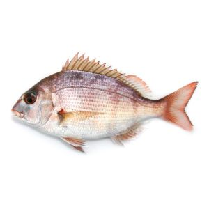 Fresh sea bream Madai from Japan - about 1.4kg 209 aed/kg (whole fish) - 10 days lead-time