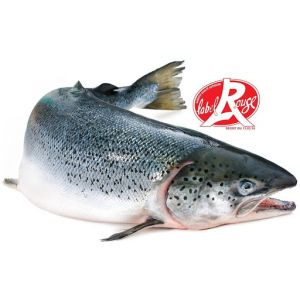 Fresh Scottish whole salmon Red Label quality 145 aed /kg - 3 to 4kg - price will be adjusted as per final weight