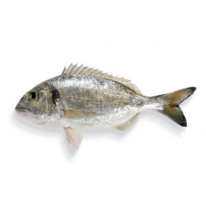 Fresh whole WILD grey sea bream / Daurade Royale sauvage - 210 aed / kg - 1 to 2 kg per fish