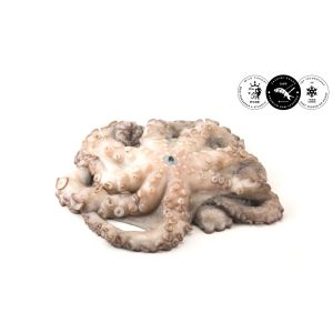WILD-caught octopus from Atlantic Ocean sashimi-grade 2 to 3kg - (frozen) - price will be adjusted as per final weight