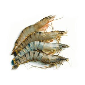 Raw wild-caught royal tiger prawns shell-on - 2kg (frozen)