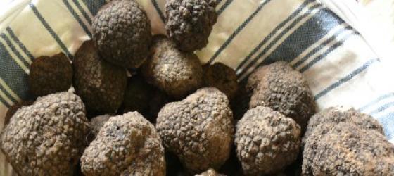 The secrets of truffle, the black magic diamond