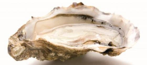 The mysteries of oysters